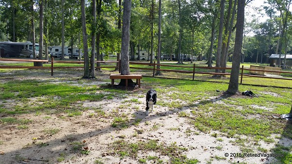 Jagger Exploring the Dog Park