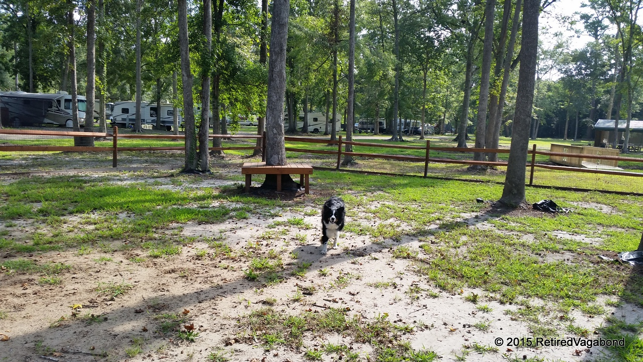 Jagger Exploring the Dog Park