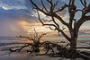 Morning Golden Hour, Driftwood Beach, Jekyll Island