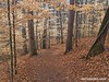 Hiking trail in winter, Chattahoochee River National Recreation Area
