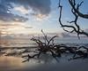 Driftwood Beach Morning, Jekyll Island