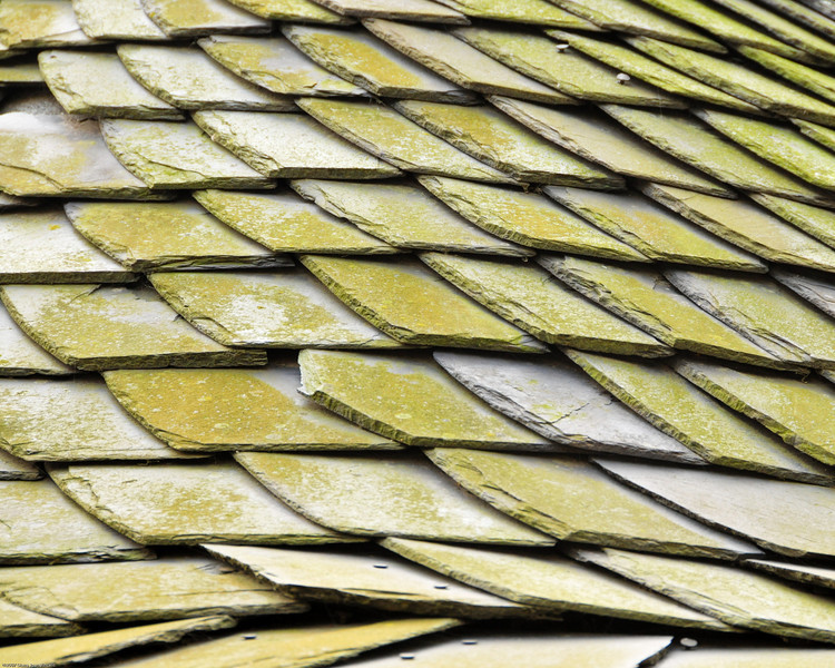 Moss covered tile roof in Magdeburg, Germany.