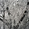 Hoarfrost on tree branches.