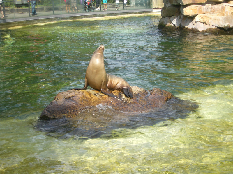 A sunbathing sea lion