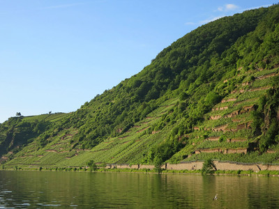 Beilstein Moselle hillside vineyards
