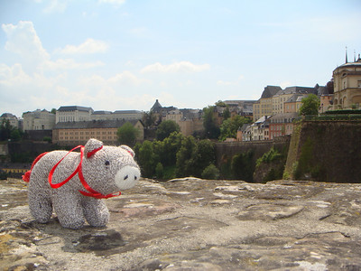 Humboldt the pig's debut picture perched on top of the Bock Casements with buildings from Luxembourg City in the background.