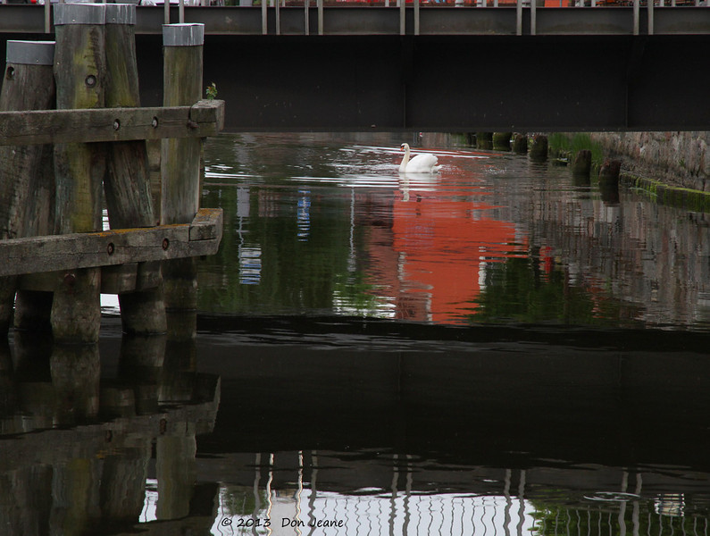 Harbour area, Stralsund, May 24, 2013. The Mute Swan landed just as I was photographing the reflection.