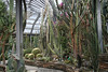 Berlin Botanical Gardens, May 29, 2013. Impressive collection of cacti.