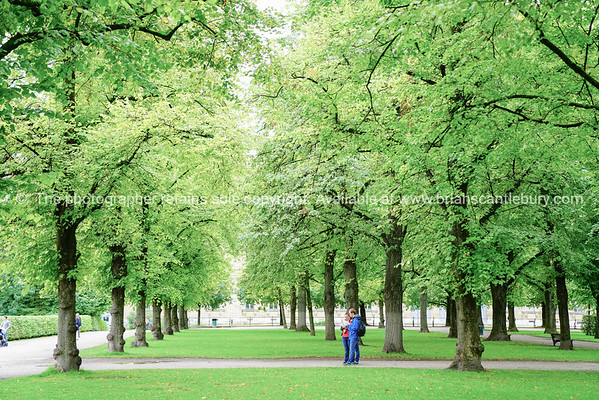 Young couple look at map between lime green tree foliage in Hofgarten.