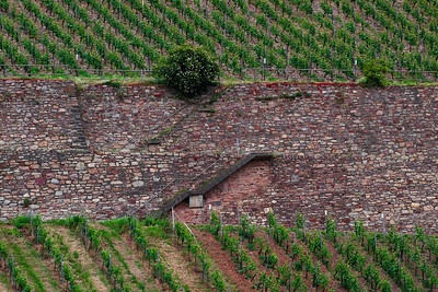 Wine of Rhine