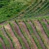 Wine of Rhine