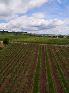 WIneyard of Rudesheim