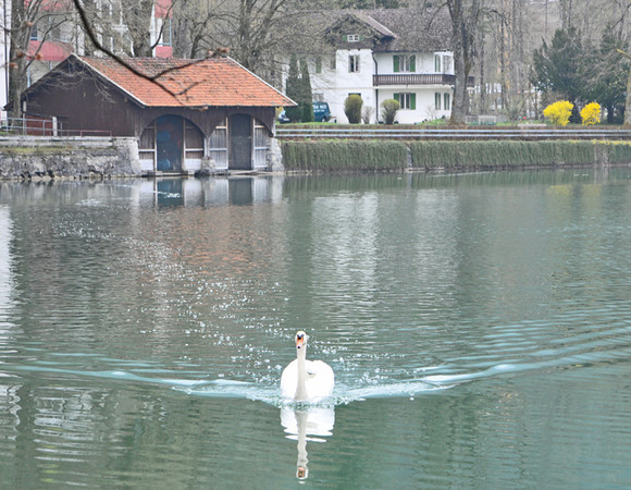 That is, until a swan stirred up the water on its way over to see if we had any food....