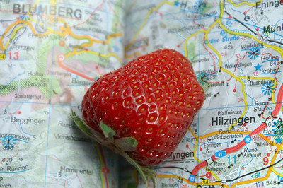 My job - directions and eating strawberries :)