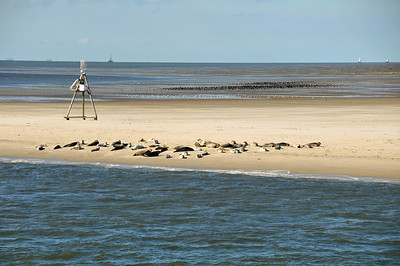 Seals on Norderney