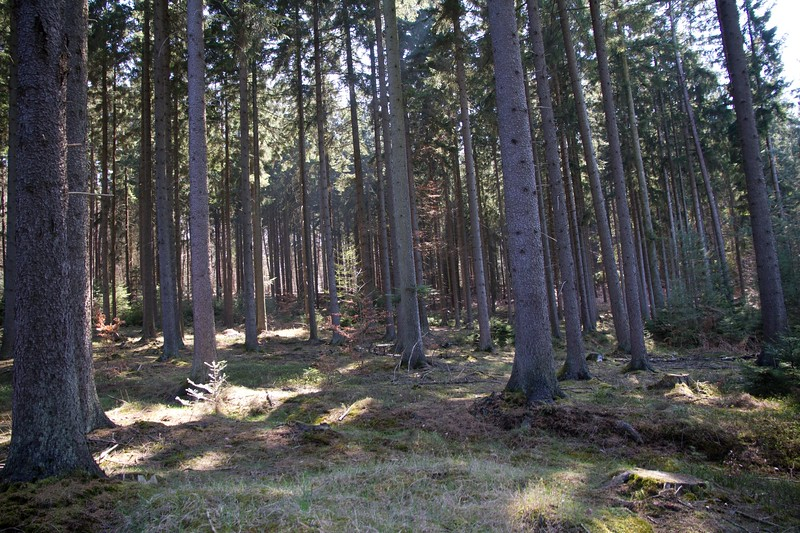 Forest in Duetchland