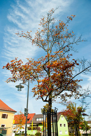 The sun came out yesterday and I finally saw blue sky!  The autumn leaves are beautiful against the vibrant hues and wispy clouds.