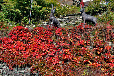 Beautiful red leaves cover the hillside in Sculpture Park.