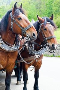 Horsedrawn carriage Schwangau, Germany