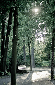 Park bench in a park. Berlin, Germany.
