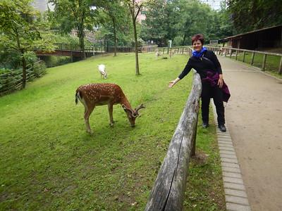 Vivian with Fallow Deer