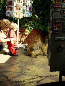 What not to do when near Gibraltar Barbary macaques
