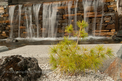 Ornamental plant in front of waterfall at the Frank Russell Threshold building in Gig Harbor, Washington.