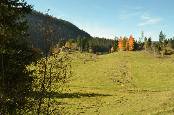 Pasture to the west of the Givrine, above St. Cergue, Switzerland