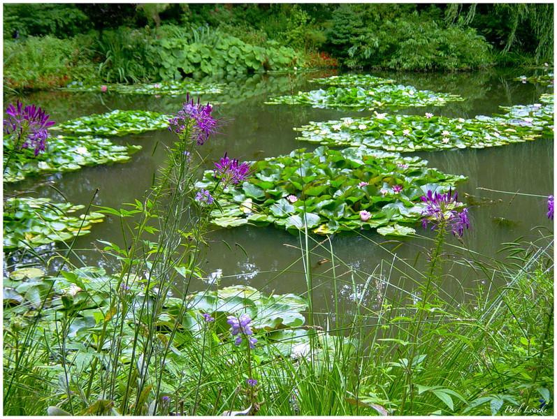 water garden from the perimeter pathway