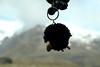 Glacia, our black sheep keychain.