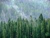 Rainy Day - Kootenay River