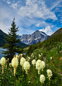 July 6-13, 2019 - Montana Glacier National Park  Saturday - 7/ 6 Glacier Park Lodge  Sunday 7/7 Many Glacier Lodge- Grinnell Glacier Hike (with views of Swiftcurrent Lake- Grinnell Lake- Gem & Salamander Glaciers)  Monday 7/8 Iceberg Lake Hike  Tuesday 7/9 Going to the Sun Road St. Mary and Virginia Falls  Thursday 7/11 High Line and Loop trails  Friday 7/12 Hidden Lake Trail  Saturday 7/13 Lake Mcdonald   Photographer- Robert Altman Post-production- Robert Altman