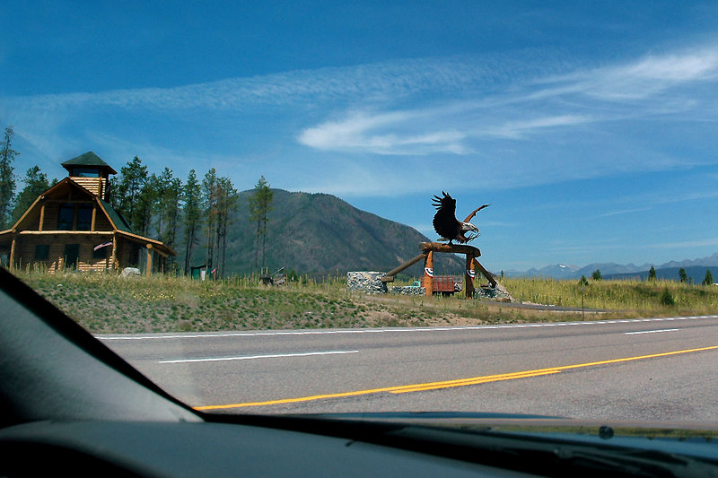 Big eagle off Hwy 2 as we head towards Glacier Nat'l Park's west entrance. Photo by Helen
