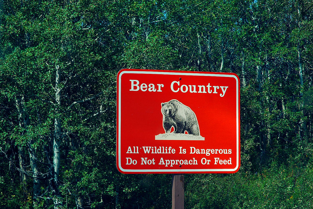Bear sign. We saw a total of 8 bears on this trip, most from a distance.
