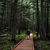 """Trail of the Cedars is a very short, boardwalk trail through some big old cedars and has a very """"rainforest"""" feel with lots of ferns and moss."""