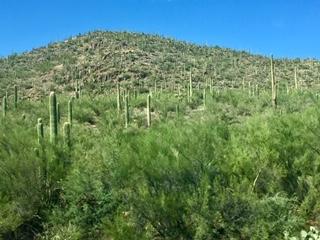 Sonoran Desert Tucson