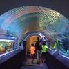 Discovery World Aquatarium