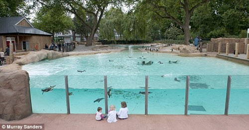 Toddler in London to London Zoo Penguin Beach