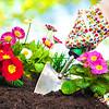Gardeners hands planting flowers