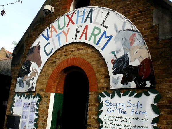 Toddler in London to London Vauxhall City Farm