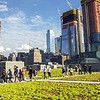 Javits Center Green Roof