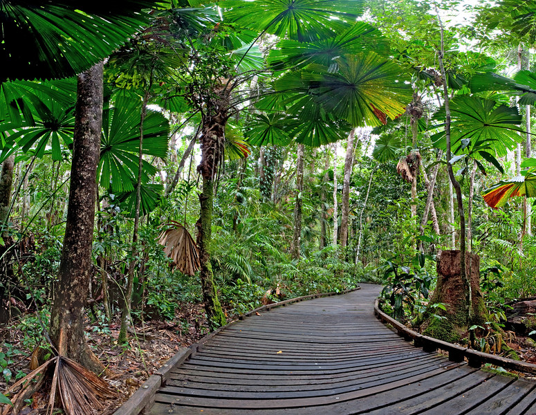 Greenest Hotels Daintree Rainforest Eco Lodge