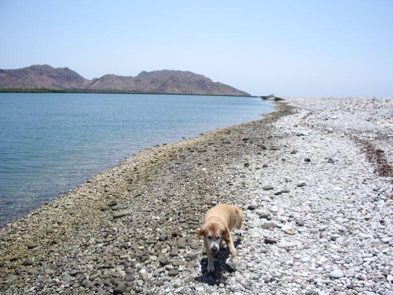 Estuary on Isla San Jose called La Amortajada.  Lots of bones and shells