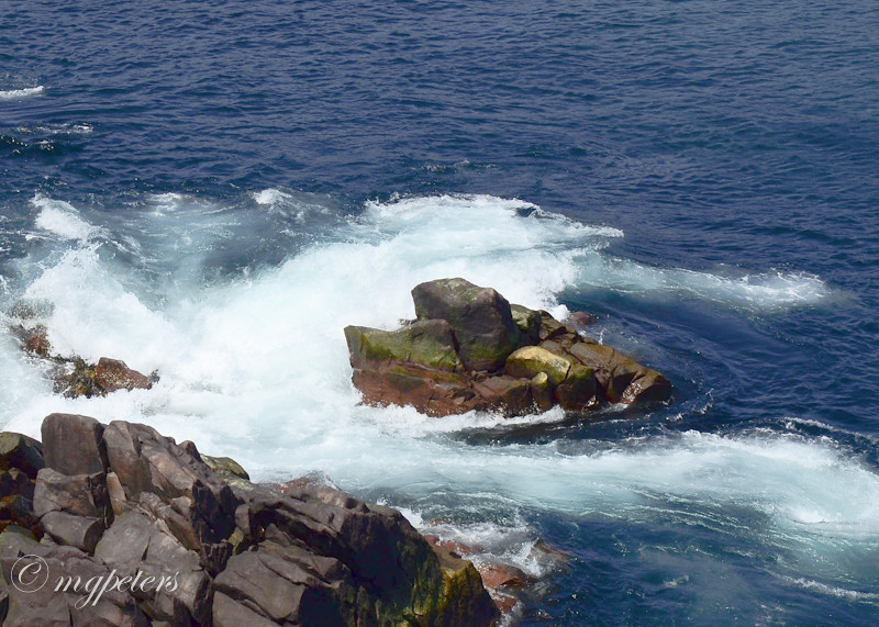 Whales-Cape Spear-11