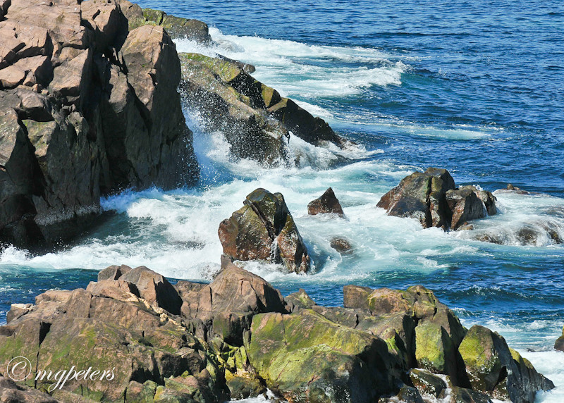 Whales-Cape Spear-36