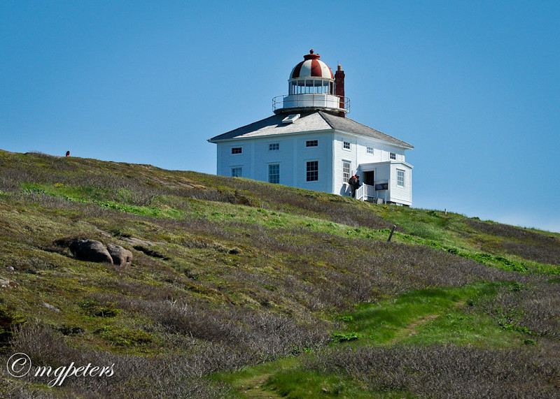 Whales-Cape Spear-39