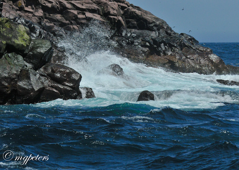 Whales-Cape Spear-16