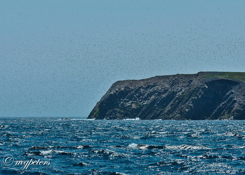 Whales-Cape Spear-15