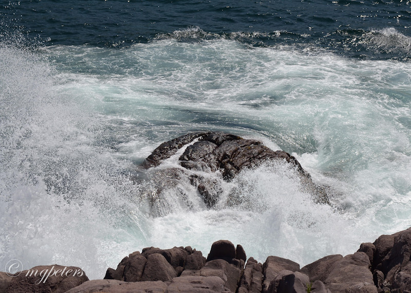 Whales-Cape Spear-8