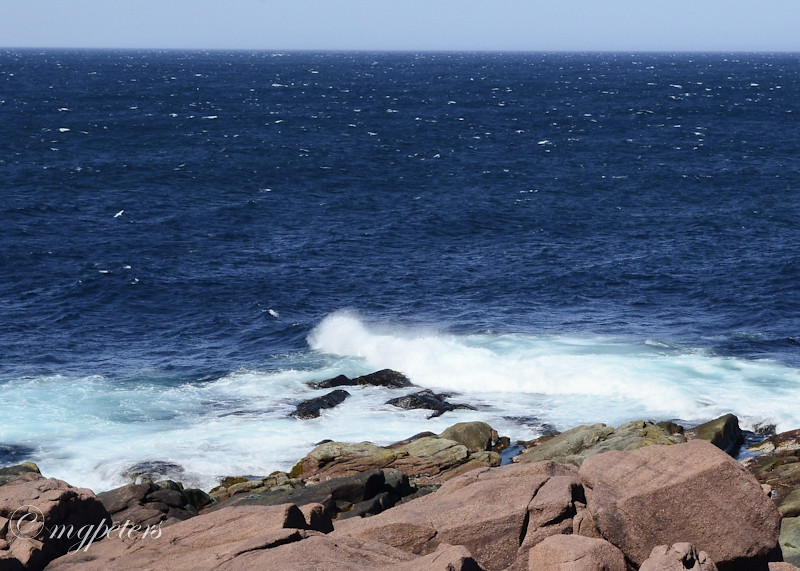 Whales-Cape Spear-12